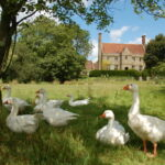 house-and-geese-publicity-1024×681-1024×681